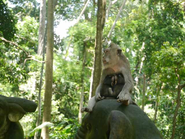 Monkey Forest en Ubud