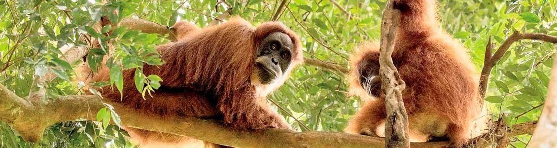Viaje a Sumatra y Komodo