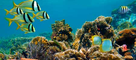 La isla Menjangan para practicar snorkel en Bali